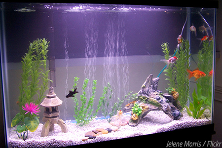 How To Move A Fish Tank To Another House A Fintastic Step By Step Guide Mymovingreviews